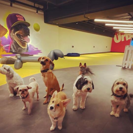 Razmazite vašeg najboljeg prijatelja: Otvoren prvi luksuzni hotel za pse u Londonu