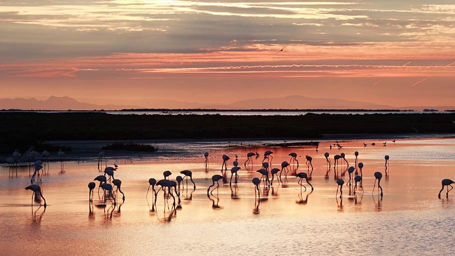 Mozaik boja i svjetlosti: Camargue je raj na zemlji s divljim konjima i ružičastom vodom